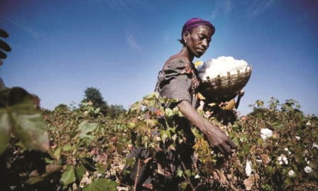 WTO members support to cotton spread in West Africa