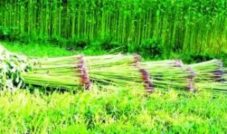 Jute and jute goods export maintain a steady growth