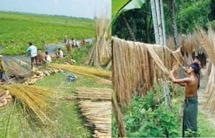 Bangladesh can become main supplier of jute to global car industry